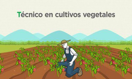 Curso de Técnico en cultivos vegetales